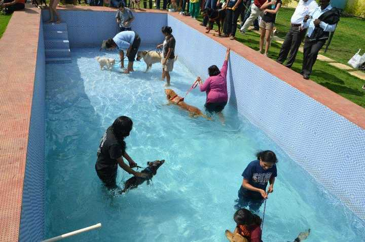 Best Pet Friendly Places For Family Outings In Bangalore Mycity4kids