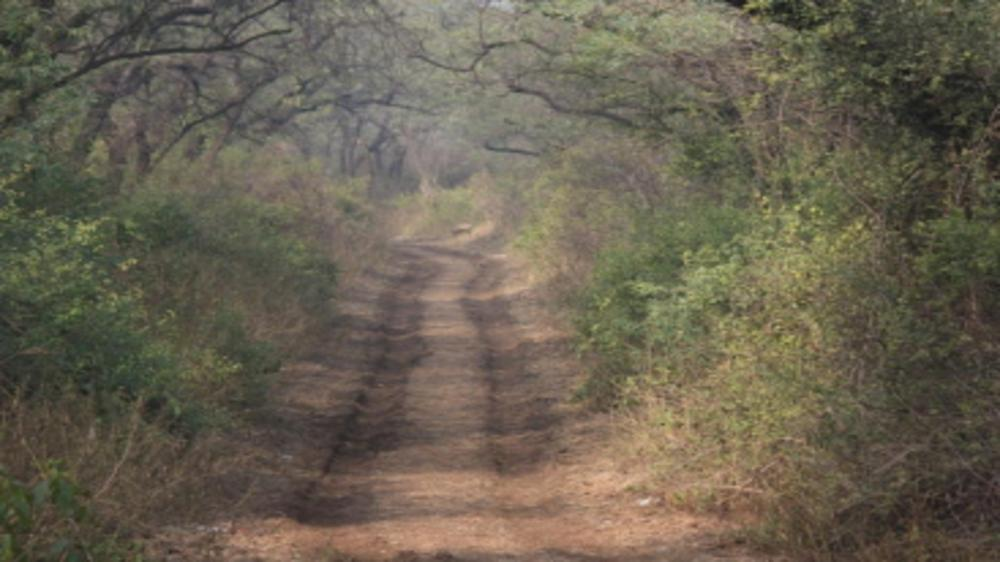 Best places to take your kids for Hiking and Nature Walks in Delhi/ NCR