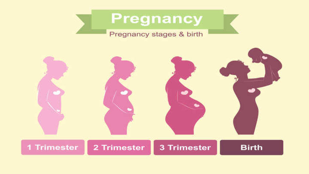 Pregnant? Know Your Trimesters!