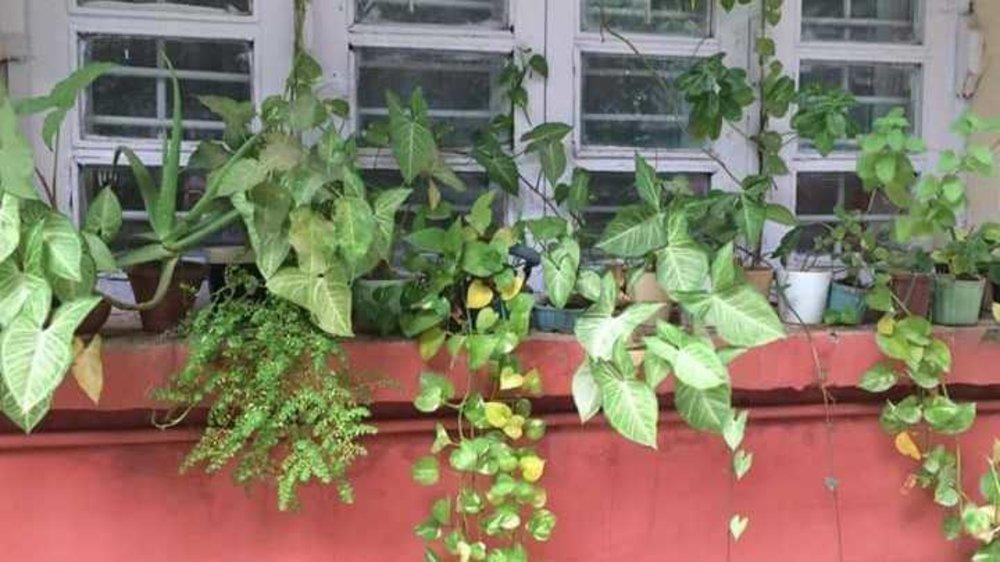 Plants on my windowsill