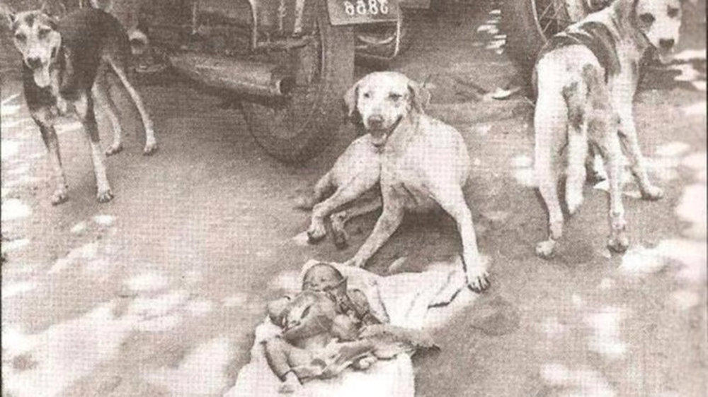Baby Abandoned At Railway Station Is Surrounded By Stray Dogs. What Happens Next Will Shock You